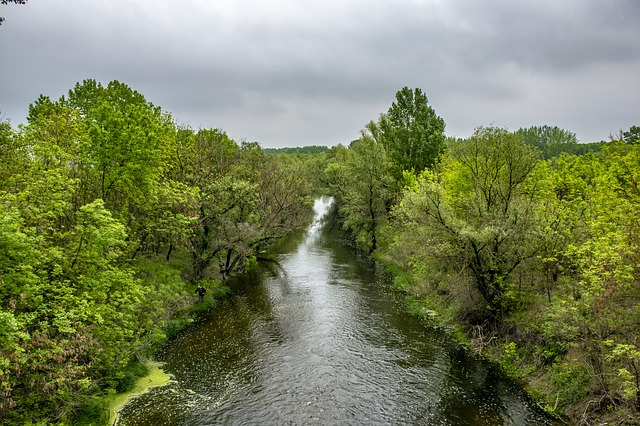 River lined by trees
