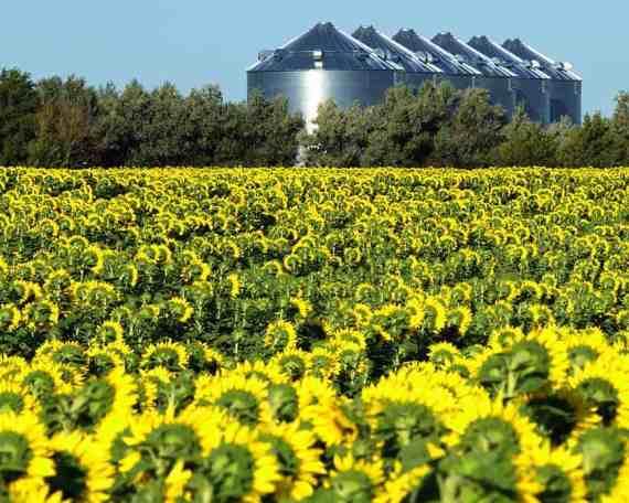 Bio Fuel Production Process Control Flowers