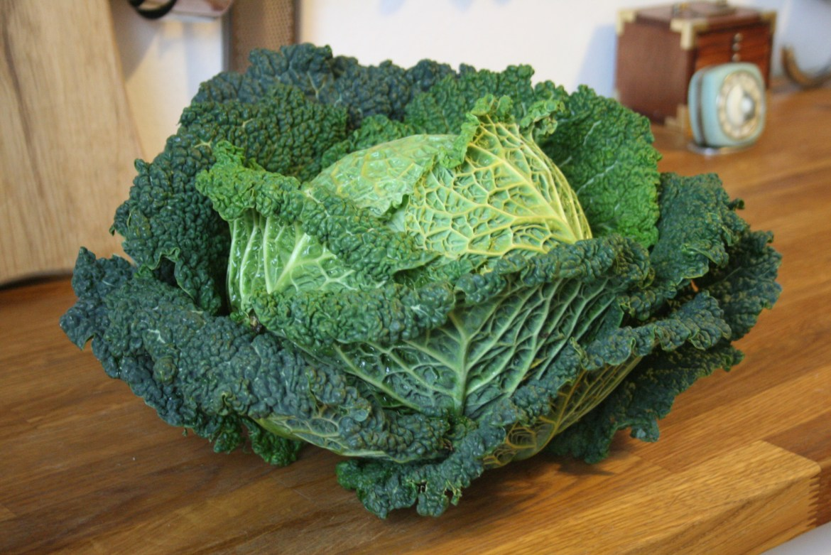 A whole Savoy cabbage