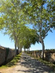 Tree-lined road in Olonzac, France