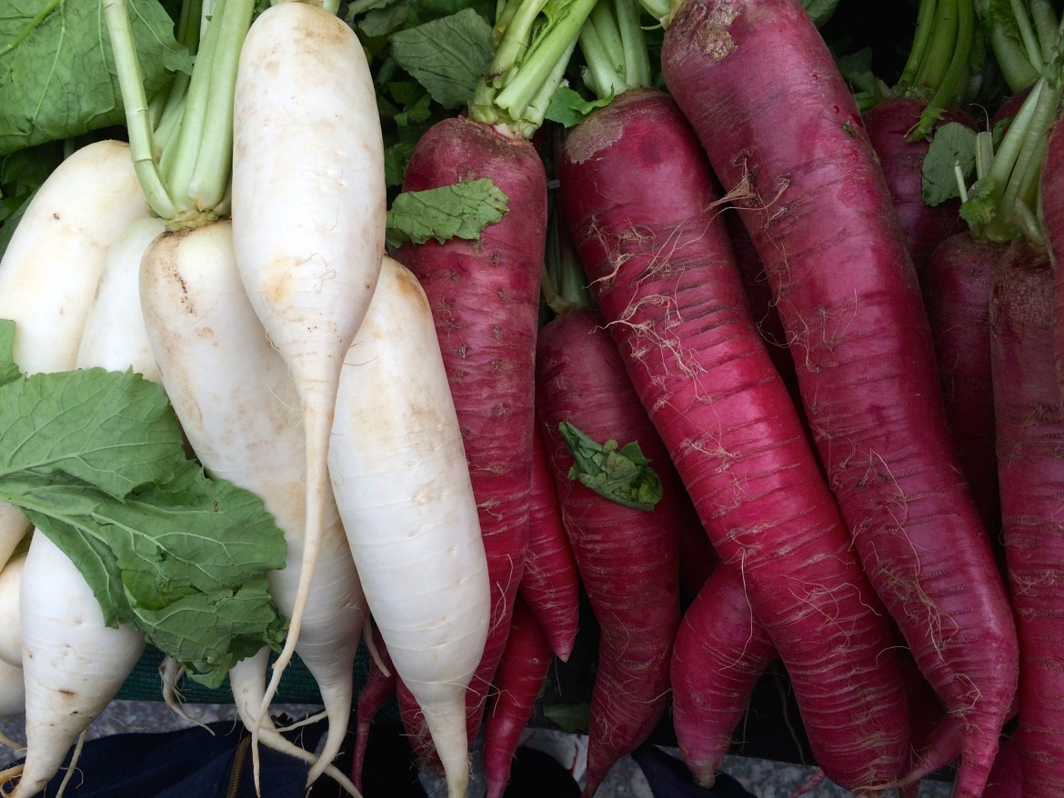 Red and white winter radishes