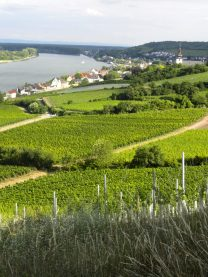 View of Nierstein over the vineyards