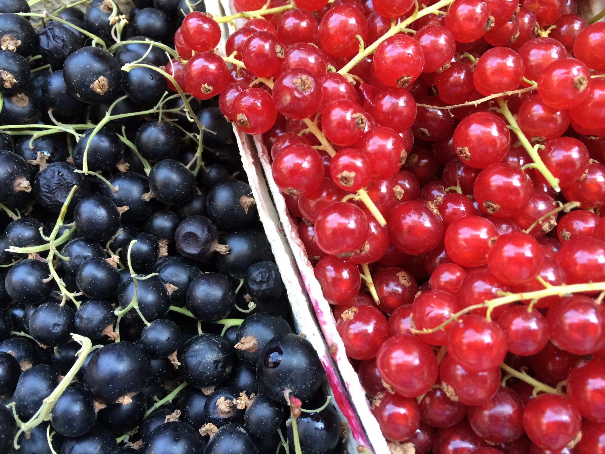 Rote Grutze German Berry Compote With Vanilla Custard