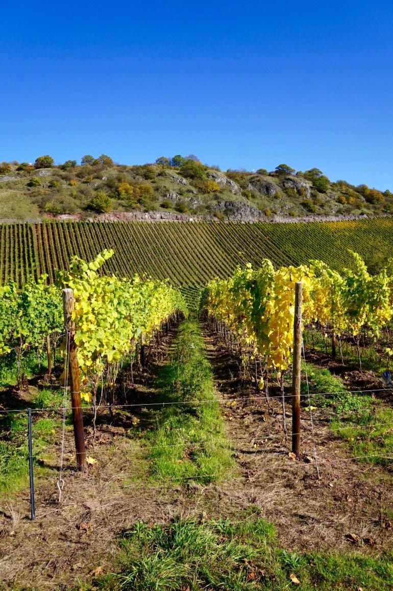Vineyards in the Nahe region of Germany