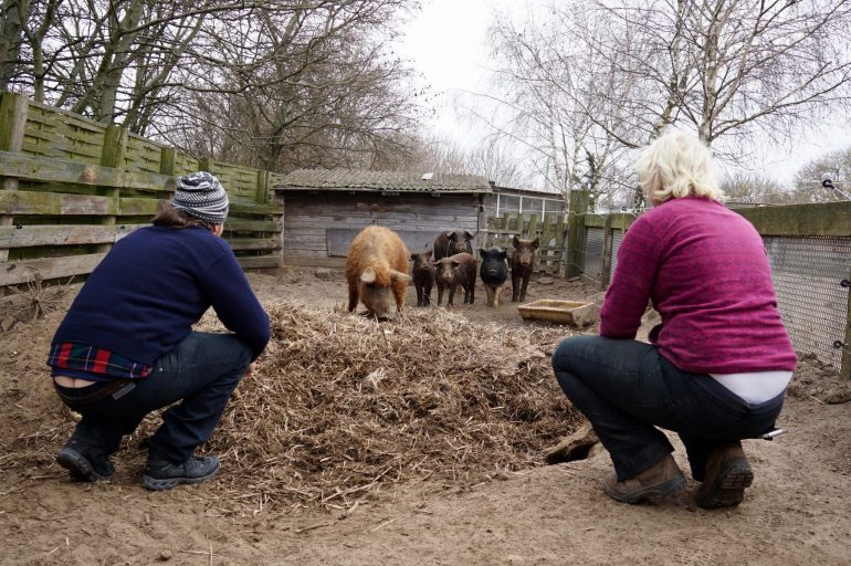 Six pigs in a sty being watched by two crouching people