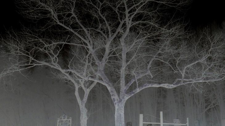 Graveyard in the Land of Terror