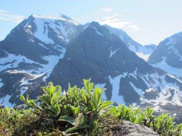 Summer in the Lyngen alps.