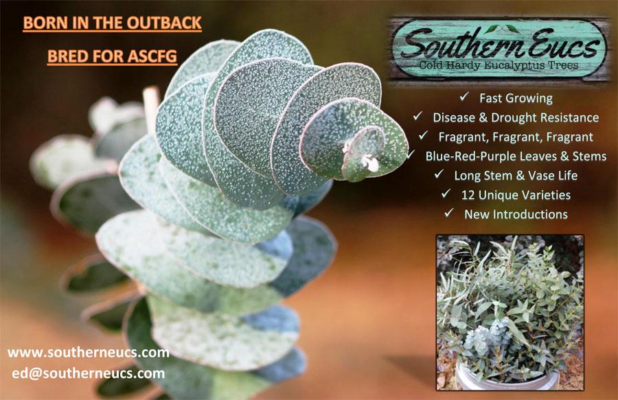 SouthernEucs ad for CC - Southern Eucs