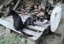 Gatti, foto d'archivio