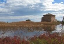 La riserva naturale Sentina
