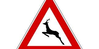 Pericolo attraversamento animali