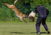 Cambodia train virus-sniffing canines to detect COVID-19(Pojakroon/Pixabay)