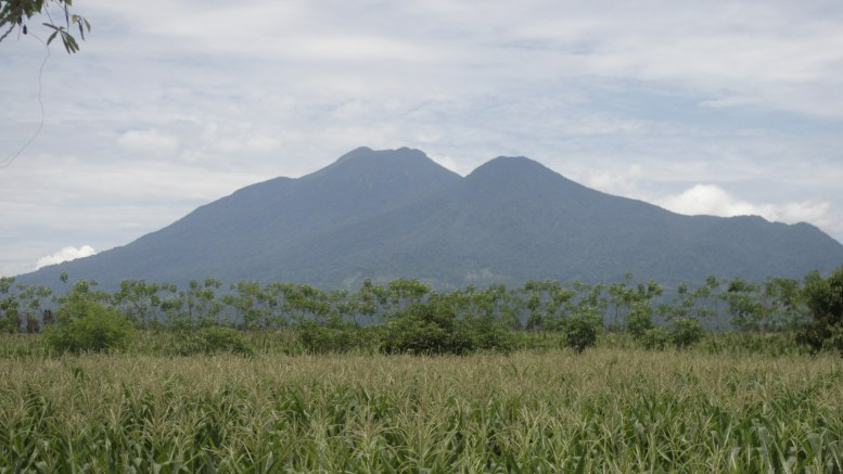 Corn, Palm Oil Plantation, and Talamau Mountain at West Pasaman, West Sumatra