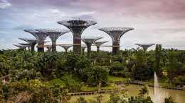 Singapore, Landscape, Garden, gbtb, landscape, garden, nature, asia, tree, plant, green