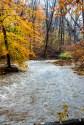 Norwood Road Creek (063)