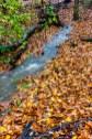 Norwood Road Creek (065)