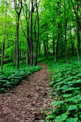 A Trail at Stroud Preserve
