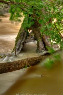 The Hobbit tree (2011)
