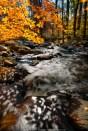 Fall Colors - Glenmoore (2012)