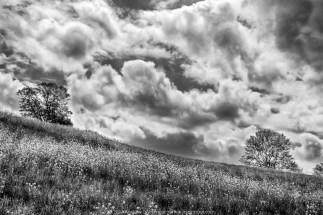 Fields & Clouds