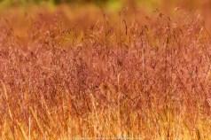 Wild Grass in the Field