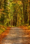 Road through the Woods - West