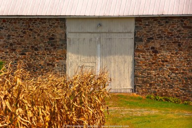 Barn in the Corn fields