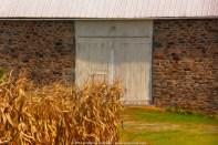 Barn door with corn stalks - Digital Art