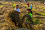 Children of the Hay 026