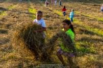 Children of the Hay 026
