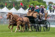 Carriages of Radnor Hunt 068