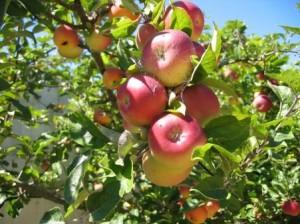 Foto Kementrian Pertanian