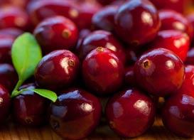Manfaat Kesehatan dari Cranberry, Alami dan Segar