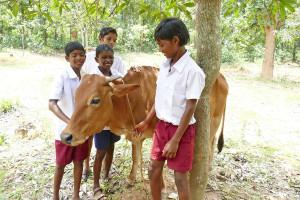 Eine von drei Milchkühen, Spendenprojekt Gerken (Foto: C.M.)