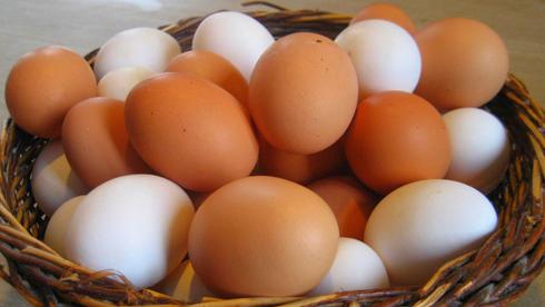 edible eggs