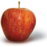 Everything about Gala Apples
