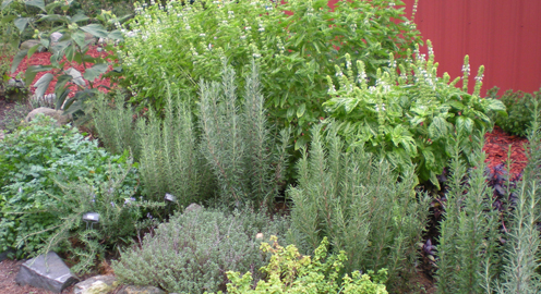 Suggested uses for herbs