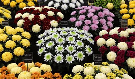 Chelsea Flowers
