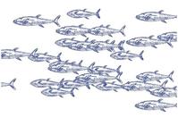 Paper-Placemats-Plat-du-Jour-Marine-Fish