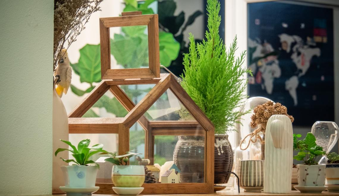 breathe easy house plants