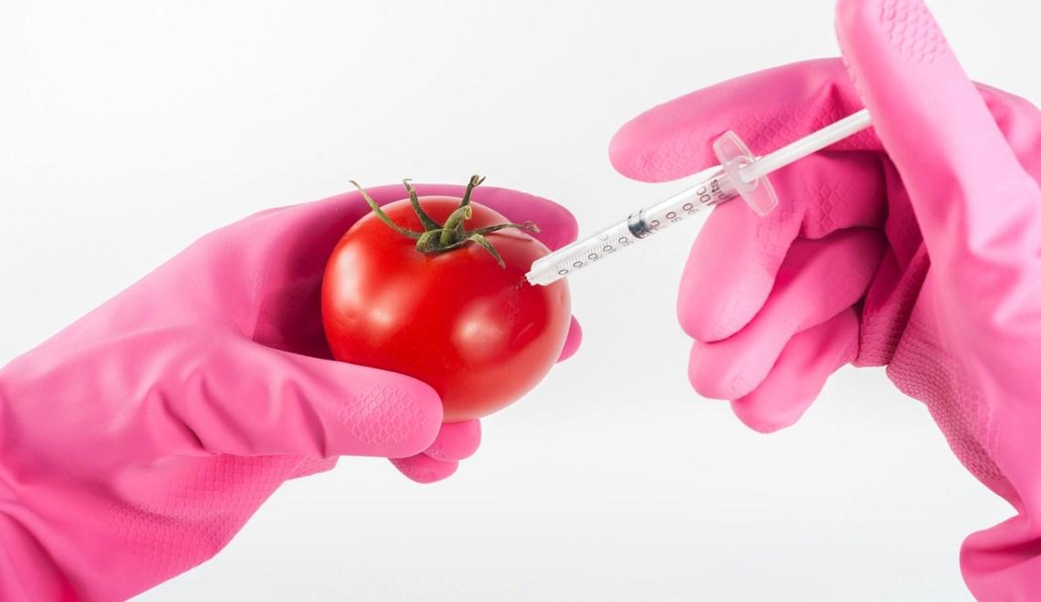 GMO FOOD