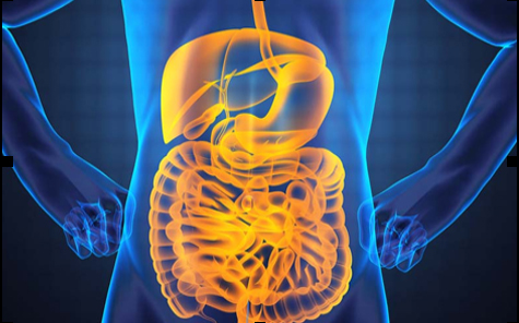 The bacteria in your digestive tract may be essential to your health