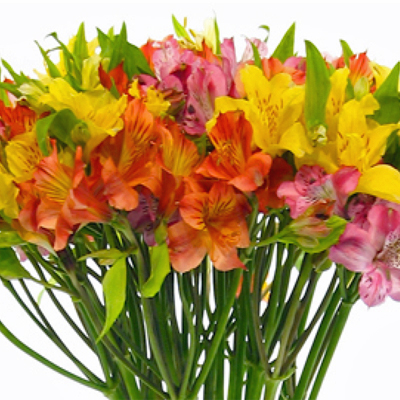 Flowers-by-Season-Alstromeria