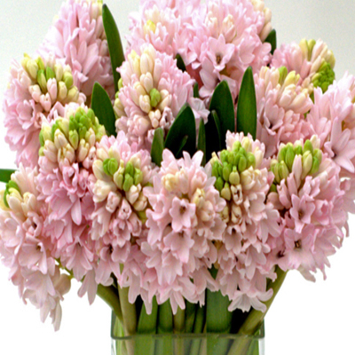 Flowers-by-Season-September-Hyacinth