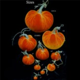 decorative-pumpkins-3