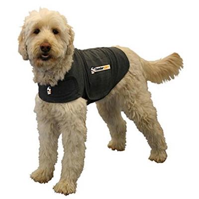 Pet Tech, Goldendoodle