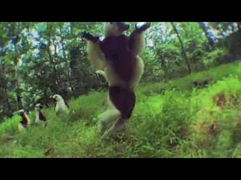 lemurs video
