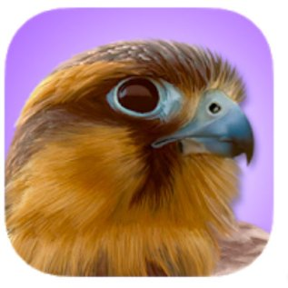 resources for birding, apps ibird