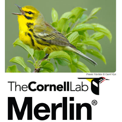 resources for birding CornellLab Merlin