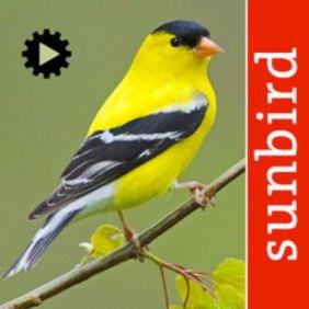 resources for birders, songbirds